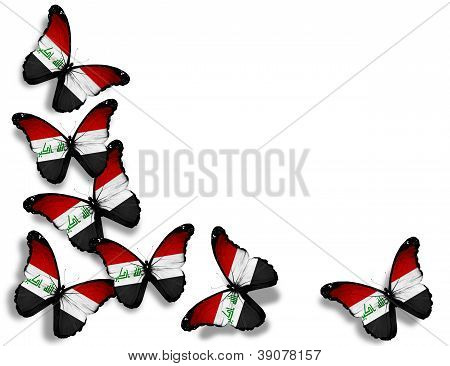 Iraqi Flag Butterflies, Isolated On White Background