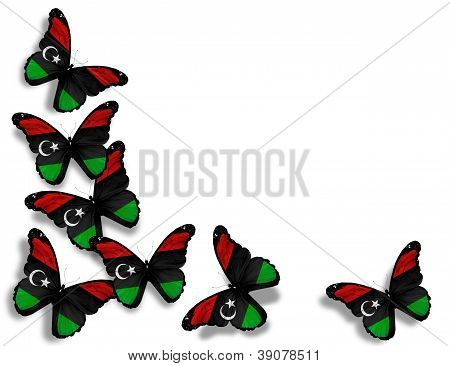 Libyan Flag Butterflies, Isolated On White Background