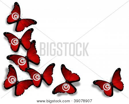Tunisian Flag Butterflies, Isolated On White Background