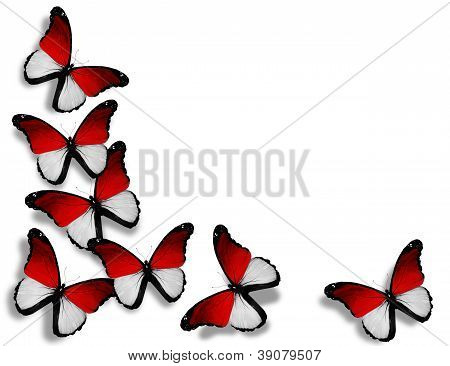 Monegasque Flag Butterflies, Isolated On White Background