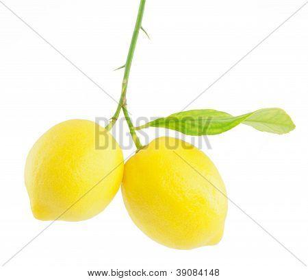Lemon On A Branch With Leaf