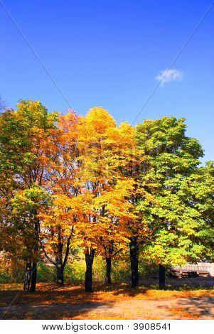Varicoloured Trees