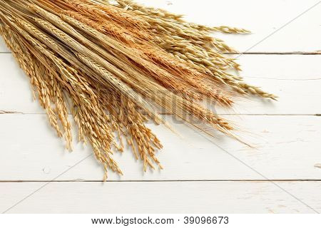 Cereal Plants