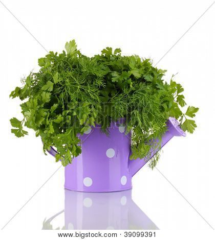 Colorful watering can with parsley and dill isolated on white