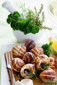 image of escargot  - Escargots de Bourgogne  - JPG