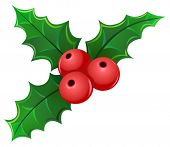 stock photo of winterberry  - Christmas holly berry mistletoe - JPG