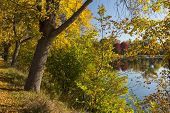 picture of winona  - Autumn colored trees and a reflective lake - JPG