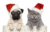 stock photo of pug  - Cat and dog in red Christmas hat on a white background - JPG