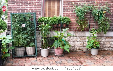 Urban Court Vegetable Garden