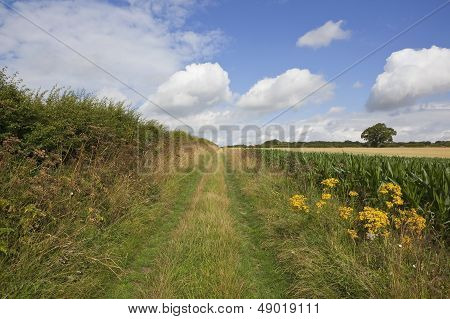 Country Bridleway