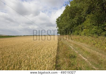 Farm Track With Wheat