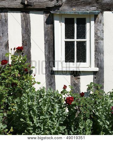 Window and rose bush