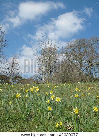 Rural Flower Landscape