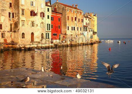 Rovinj - port with flying birds (Croatia)