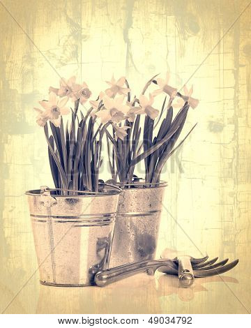 Daffodils in pots with garden tools - vintage crackle effect
