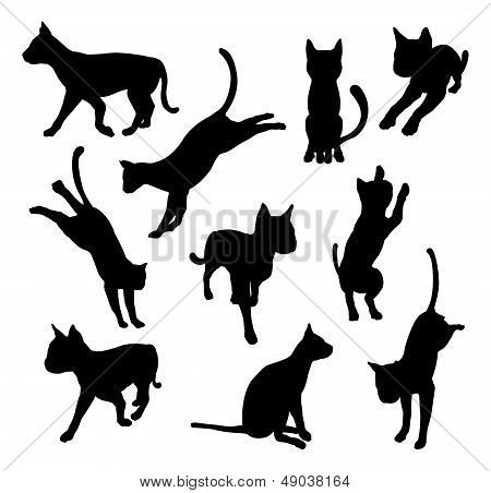 Pet Cat Silhouettes