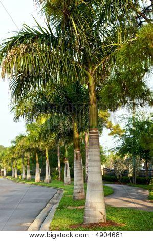 Row Of Palms