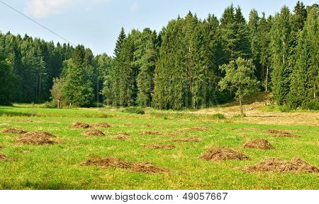 Heaps Of A Dry Grass About The Wood