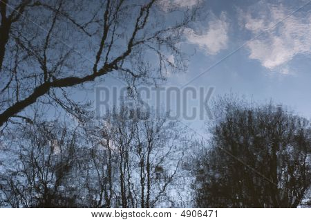 Water Reflection Of Trees