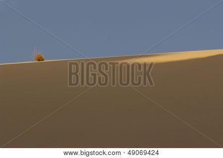 Bush on sand dune