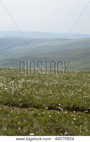 Berwyn Mountains Nr Pistyll Rhaeadr