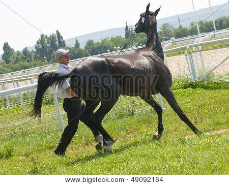 Naughty Horse.