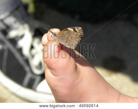 Butterfly on Foot
