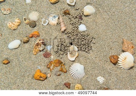 Variety of sea shells on the sand beach