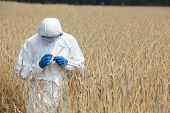 image of genetic engineering  - biotechnology engineer on field examining ripe ears of grain - JPG