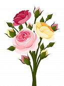 picture of english rose  - Vector branch with red - JPG