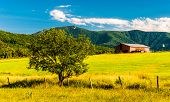 picture of appalachian  - Barn tree and view of the Appalachians in the Shenandoah Valley Virginia - JPG
