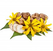 stock photo of jerusalem artichokes  - Jerusalem artichoke with flower and leaves stem isolated on a white background  - JPG