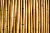 picture of tropical plants  - Yellow bamboo fence texture for  background  - JPG