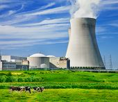 image of peace-pipe  - Cows grazing close to a nuclear power station - JPG