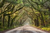 Southern Dirt Road Charleston Live Oaks and Spanish Moss