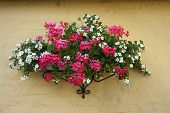 pic of planters  - Beautiful classical design planter flowerpot on a bricks wall - JPG