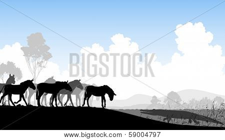 Editable vector illustration of a herd of zebra or ponies at a watering hole with a waiting crocodile
