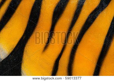 Tigerpattern