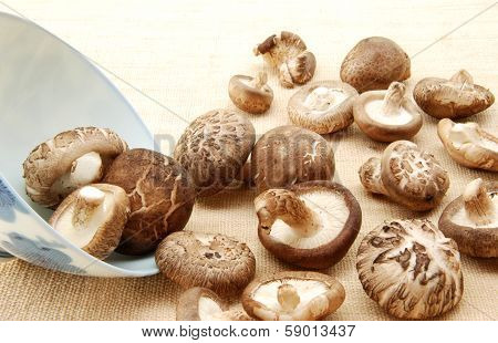 Shiitake mushroom, Authentic Chinese mushroom for health