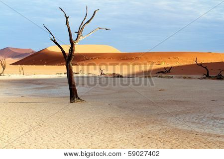 Tree And Dunes In The Desert
