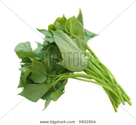 Belacan Yam Leaf