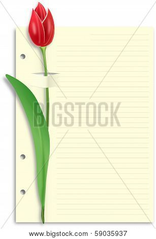 Red tulip on sliced lined paper feint