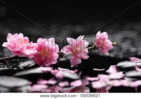 Zen pebbles. spring flower