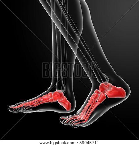 Skeletal Feet
