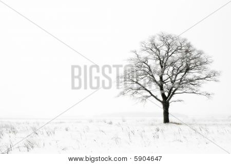 winter loneliness