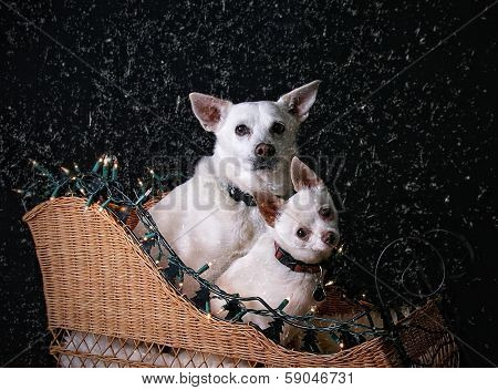 two dogs in a sleigh with snow and christmas lights