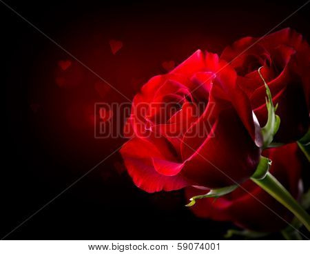 Red Rose Flower isolated on Black background. Beautiful Dark Red Rose closeup. Symbol of Love. Valentine card Border design with space for your text. St. Valentine's Day