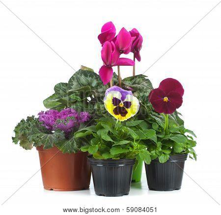 Group Of Seedlings