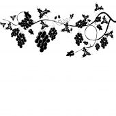 stock photo of grape-vine  - stylized black and white grapevine harvest background - JPG