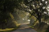 Beautiful country road with sun rays beaming through the fog
